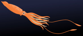 <font color=gray>Giant Squid - See for yourself Water - Dorling Kidersley</font>